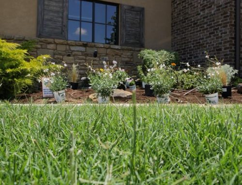 3 Ideas For Low Maintenance Landscaping