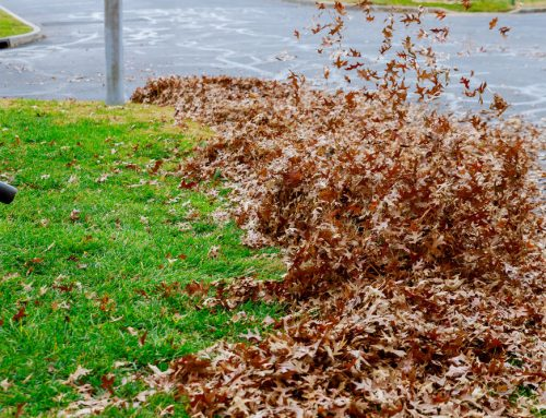 10 Fall Yard And Landscape Jobs To Complete Before Winter
