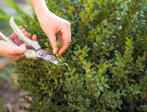 6 Reasons Why Pruning Your Shrubs And Hedges Beautifies Your Oklahoma Landscape