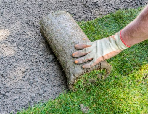 Bermuda Sod Vs. Seed: Which Option Is Better For You?