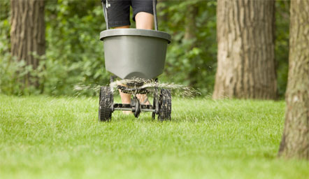 Why Your OK Fescue Lawn Needs Fall Aeration & Overseeding