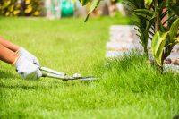 Yard Lawn Care