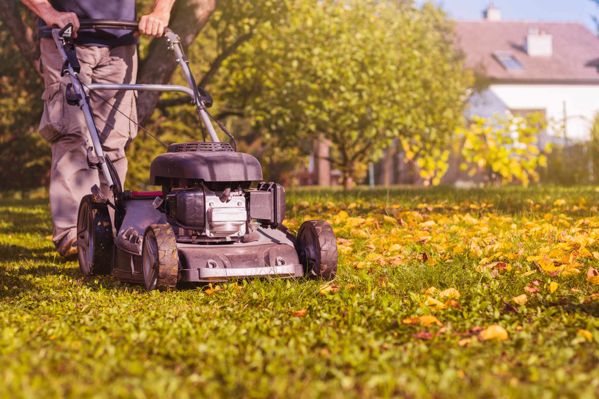 Lawn Maintenance: Common Question Answers