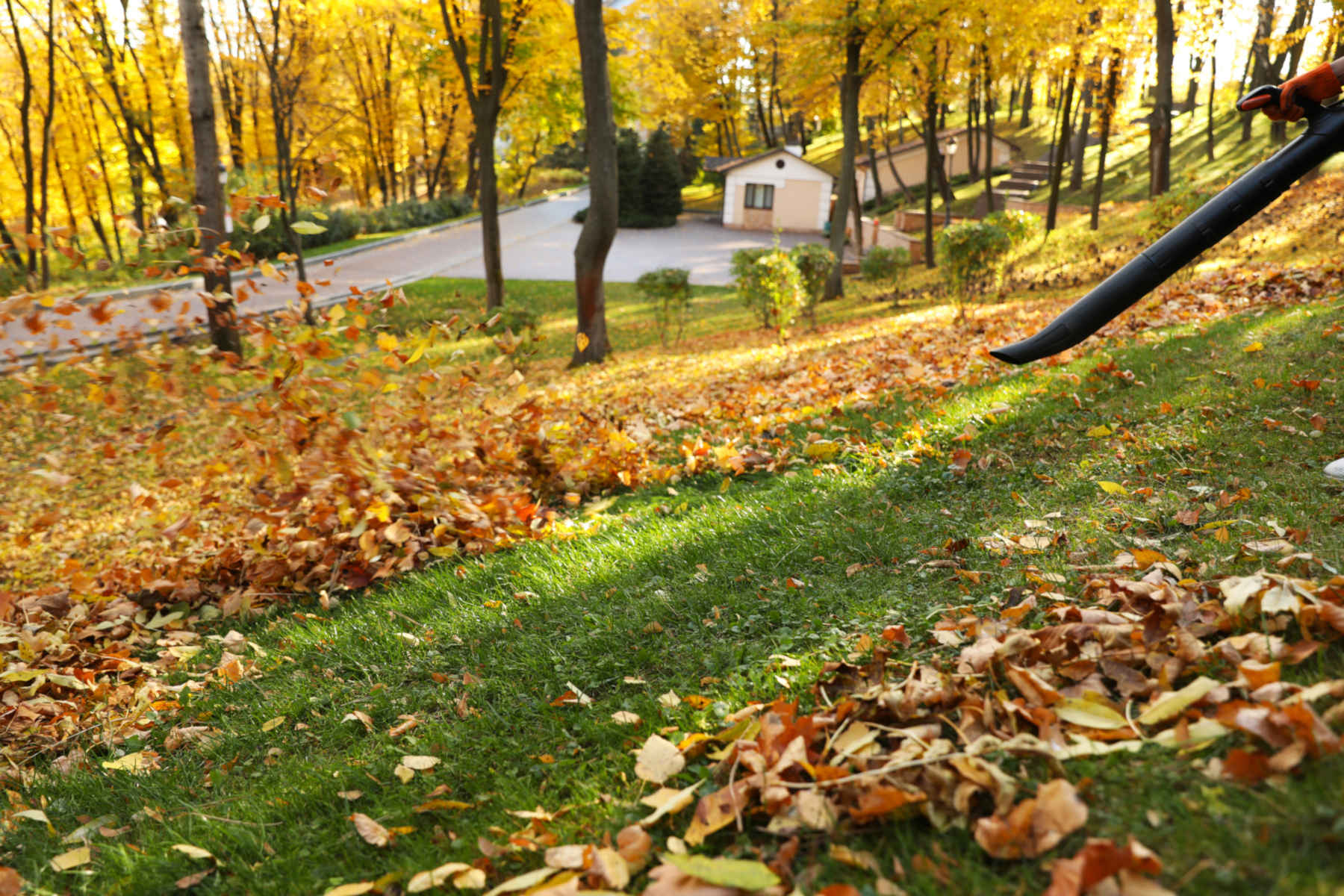 The Importance of Leaf Removal Throughout Winter