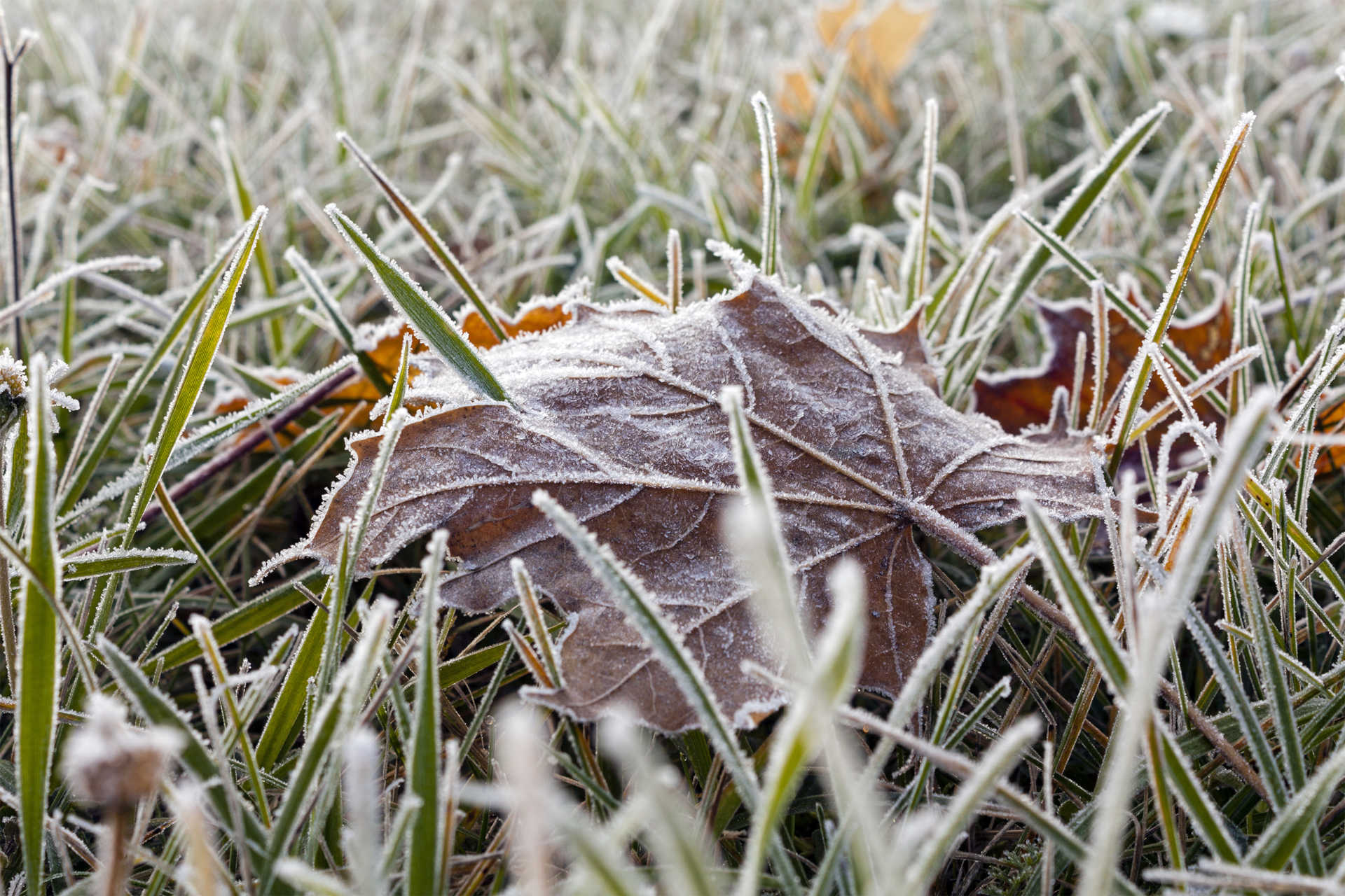 Your Lawn and Frost Damage