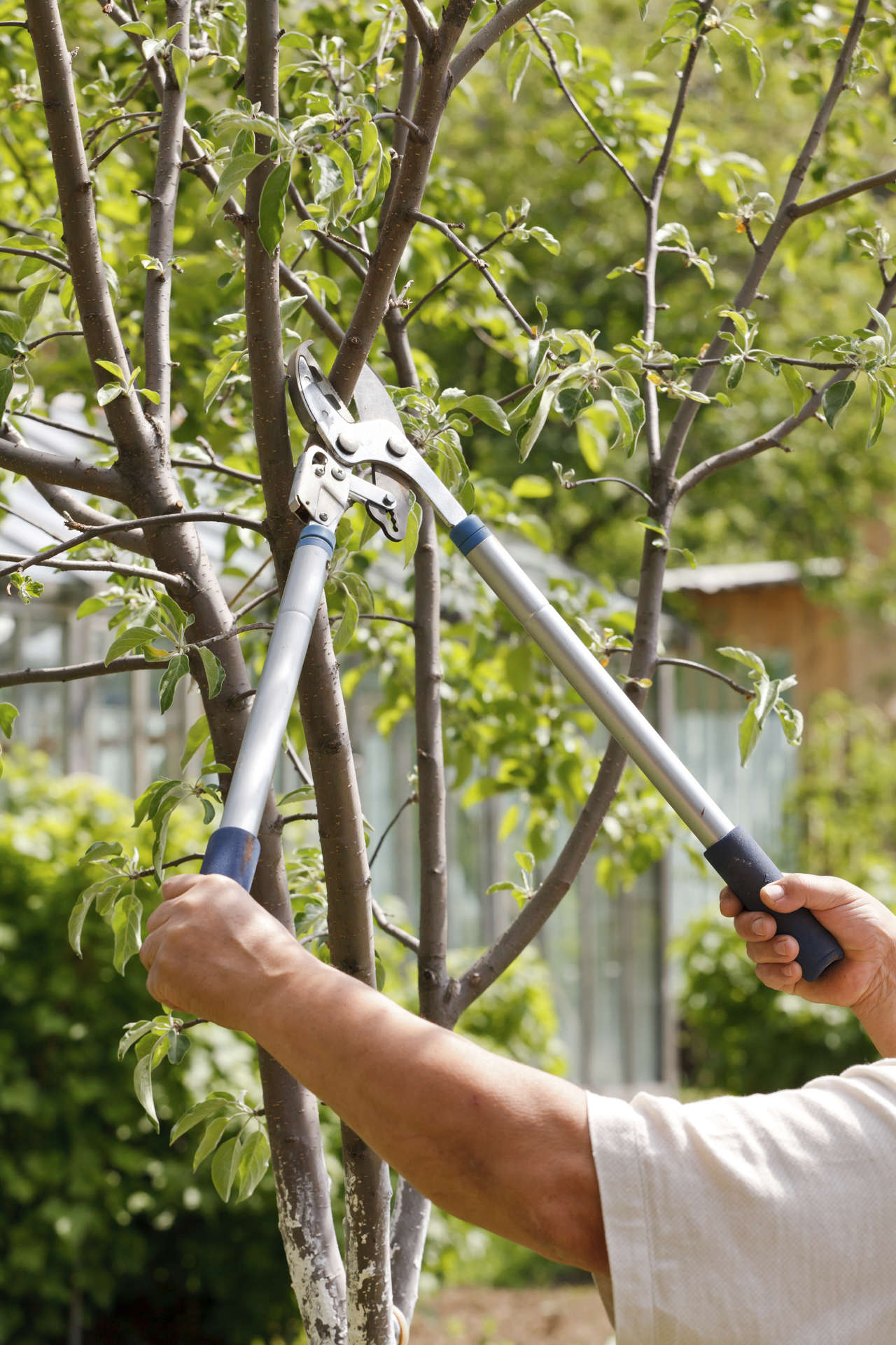 Rejuvenation Pruning